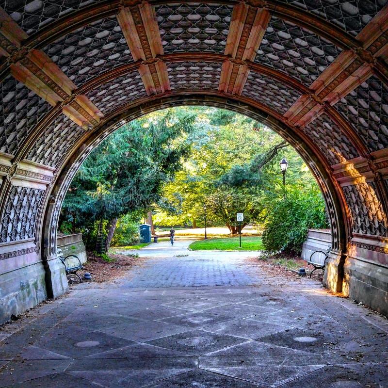 Tunnelutsikten parkerar trädvåren royaltyfri fotografi