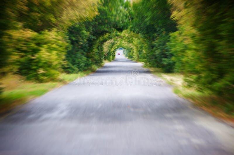 Tunnelvisie: Weg in motiesnelheid op de het onduidelijke beeldachtergrond van de asfalt bosweg royalty-vrije stock afbeeldingen