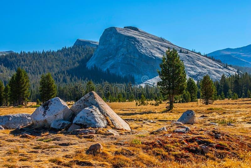 Tuolumne ängar i sommar, Yosemite nationalpark. fotografering för bildbyråer