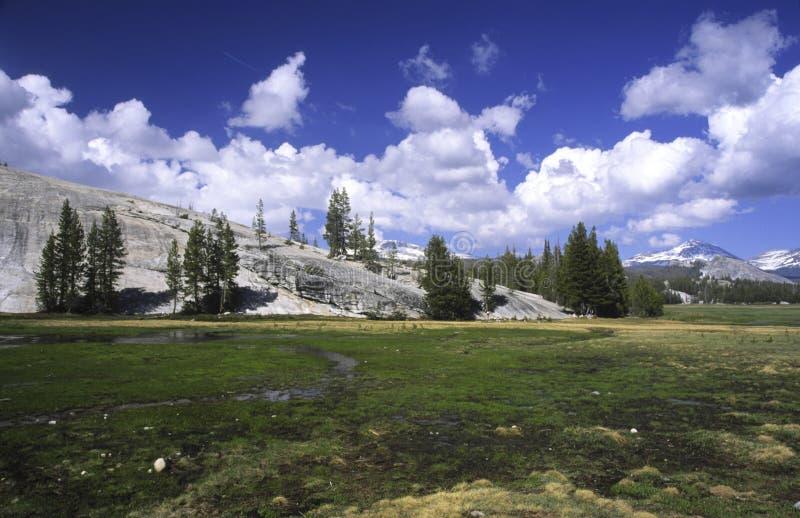 Tuolumne Meadows in Yosemite stock photos