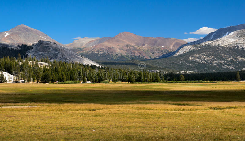 Tuolumne meadows. In Yosemite national park royalty free stock images