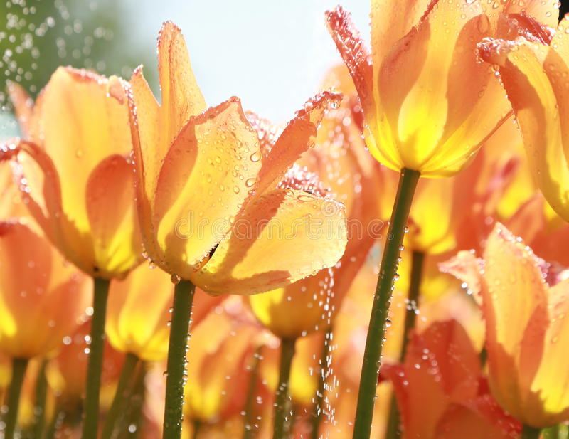 Download Tupli stock photo. Image of easter, fresh, background - 31975722