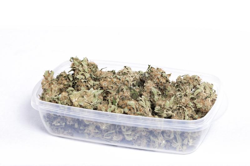 Tupperware filled with medicinal cannabis. On white royalty free stock photography