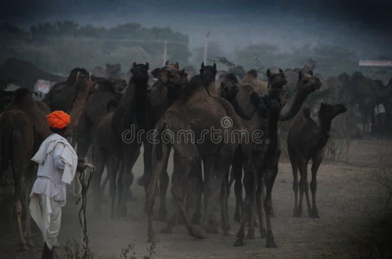 Turban-Mann im Kamel angemessen, Pushkar, Rajasthan, Indien lizenzfreie stockfotos