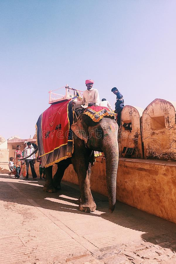Turbanmann, der seinen Elefanten bei Amber Palace In Jaipur geht stockbild