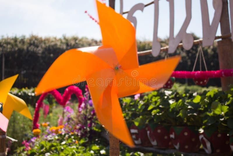 Turbina de viento del juguete en el campo del verano de la flor fotografía de archivo libre de regalías