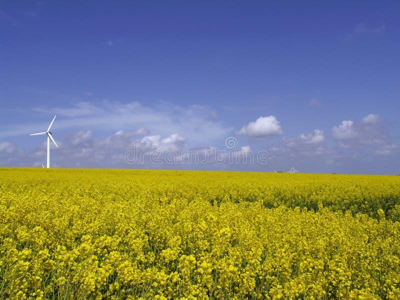 Turbina de viento en campo de la violación imagenes de archivo