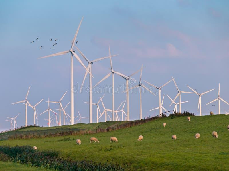 Turbina eólica e pássaros fotografia de stock royalty free