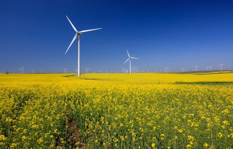 turbina wiatr Pola z wiatraczkami Rapeseed pole w kwiacie w Europa zdjęcie stock