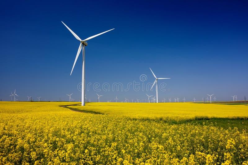 turbina wiatr Pola z wiatraczkami fotografia royalty free