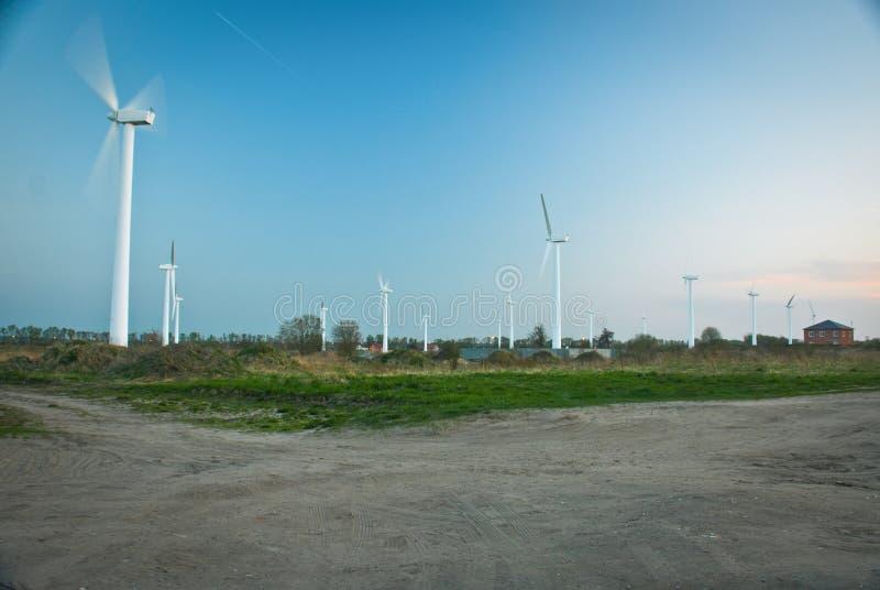 Turbinas de vento, campo amarelo fotografia de stock royalty free