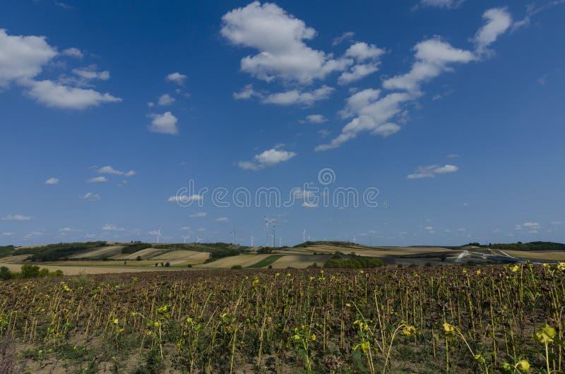 Turbinas eólicas e um campo de girassóis secos foto de stock