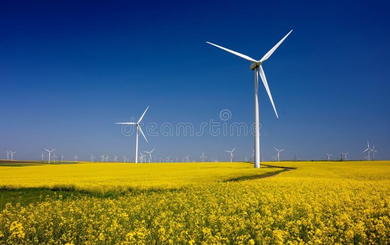 Turbinas eólicas em campos com os moinhos de vento na região romena Dobrogea imagem de stock royalty free