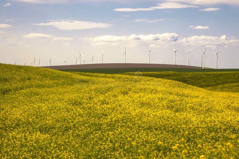Download Turbinas Eólicas Em Um Campo De Flores Amarelas Foto de Stock - Imagem de scenic, cascalho: 29835170