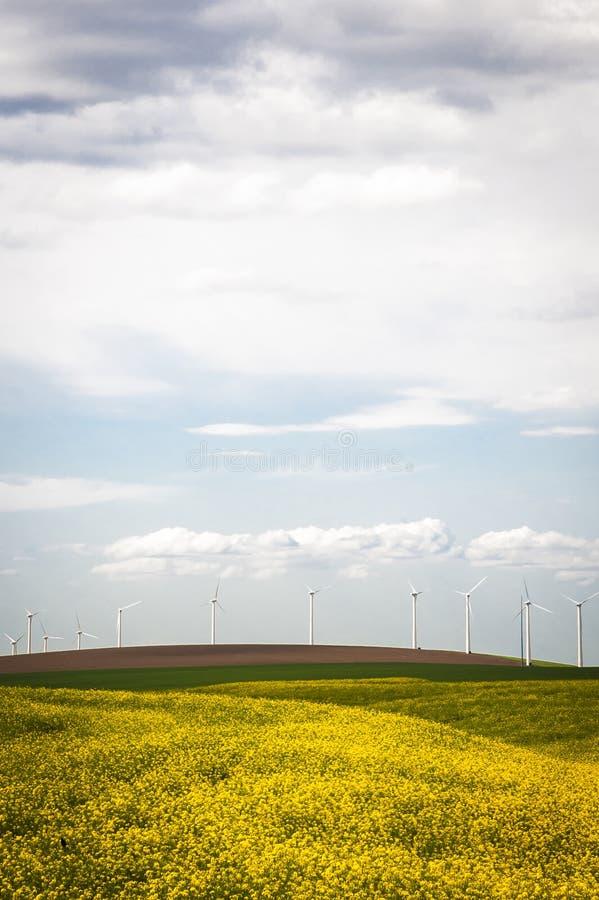Download Turbinas Eólicas Em Um Campo De Flores Amarelas Imagem de Stock - Imagem de potência, nave: 29835173