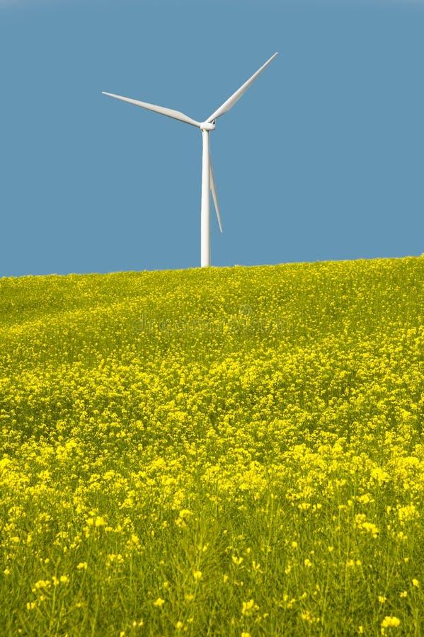 Download Turbinas Eólicas Em Um Campo De Flores Amarelas Imagem de Stock - Imagem de ninguém, outdoors: 29831697