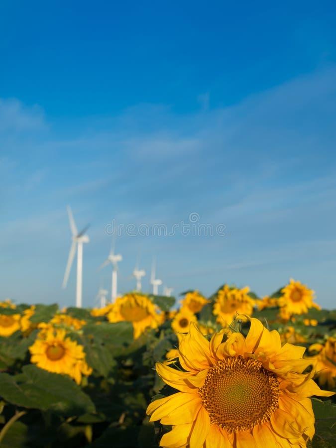 Turbinas e girassóis de vento imagens de stock