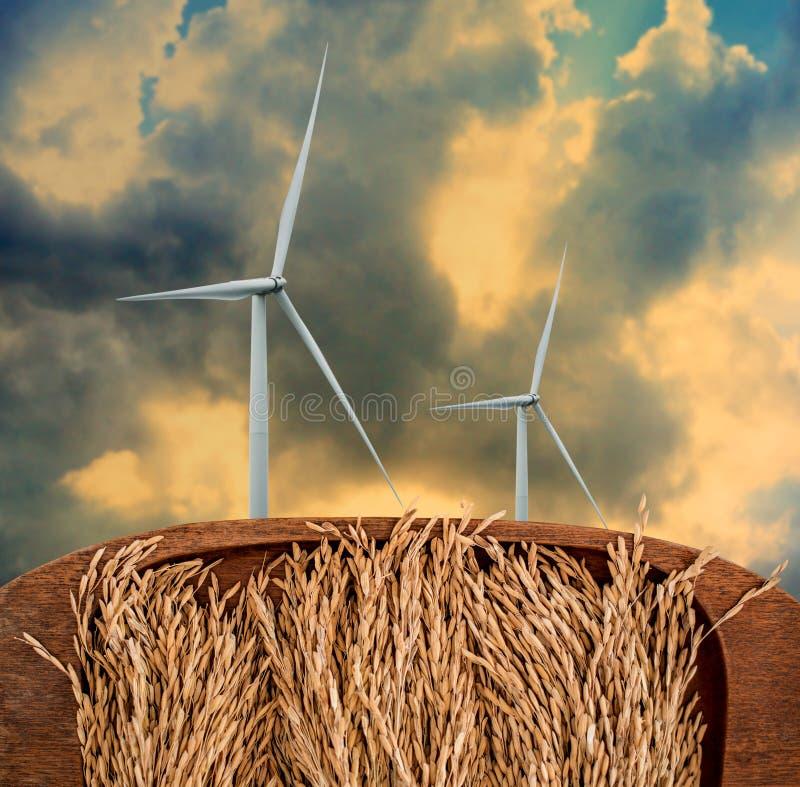 Turbine de vent avec le premier plan de rizière, viable images stock