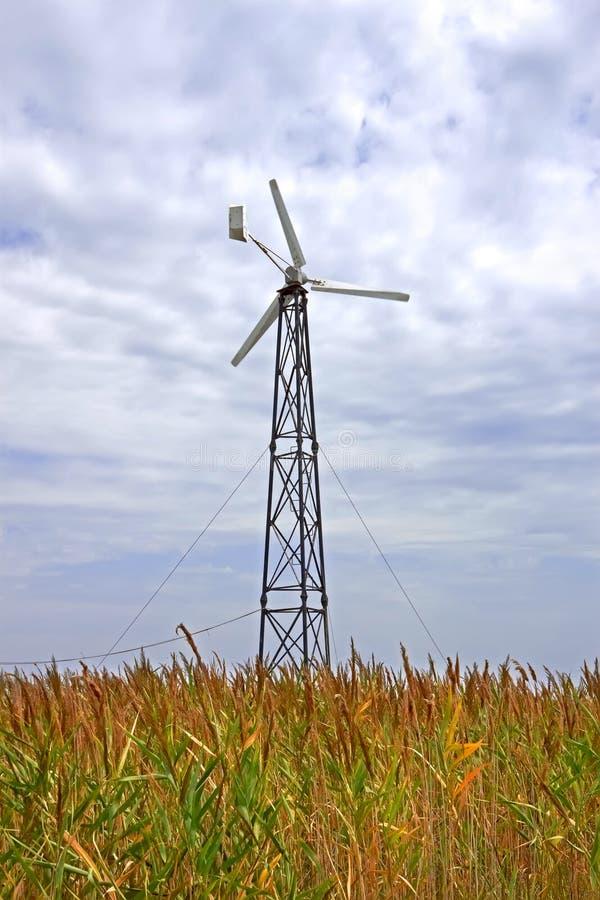 Turbinen unter hohem Schilf stockbild