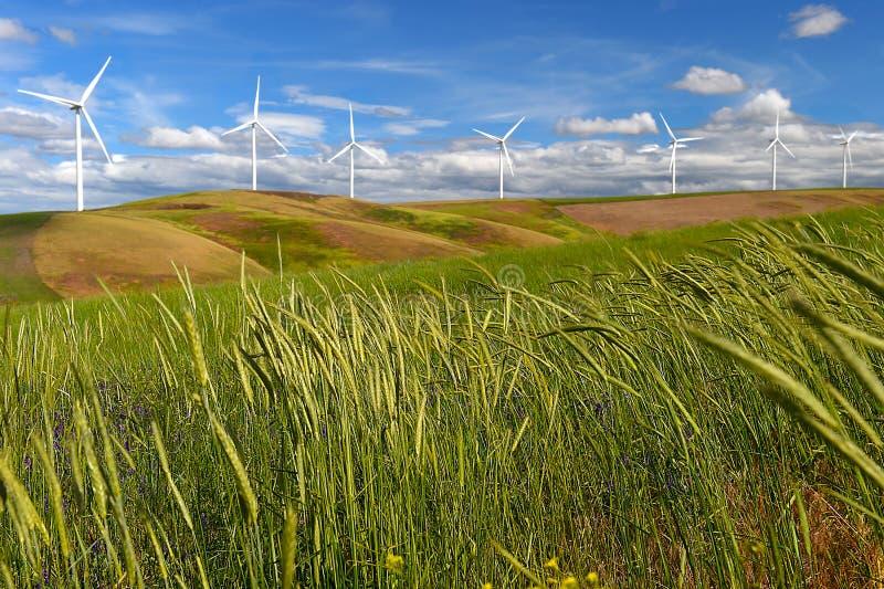 Turbiner för vindlantgården som är vita på kullen, kontrasterar grönt gräs och blå himmel, USA royaltyfria bilder
