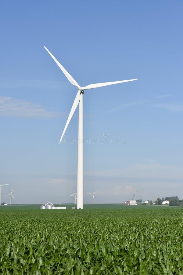 Turbiner i ett havrefält royaltyfria foton