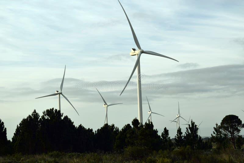 Turbiner och träd fotografering för bildbyråer