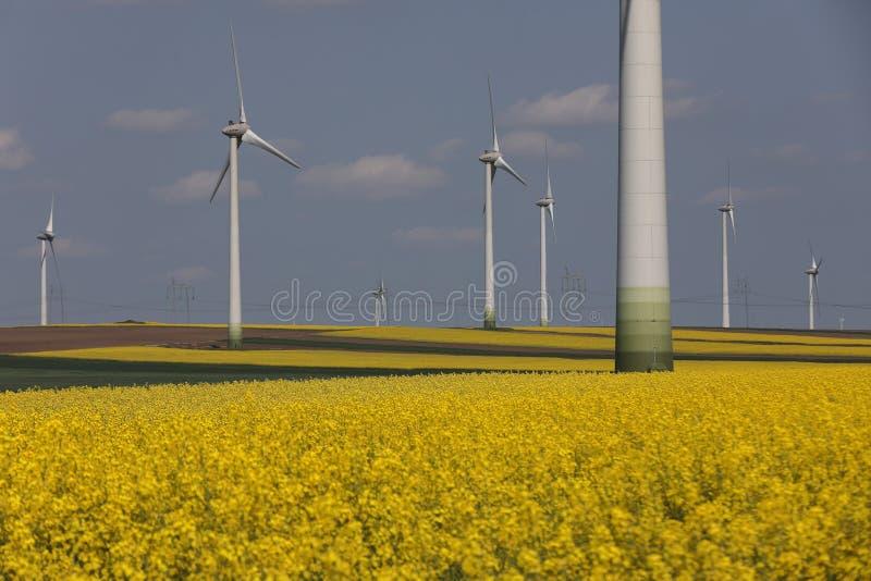 Turbines de vent, énergie renouvelable, champs jaunes photographie stock libre de droits