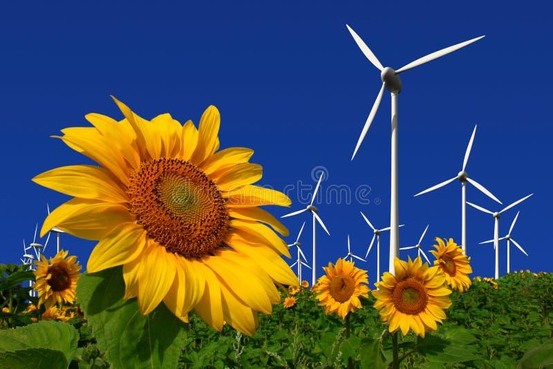 Turbines de vent derrière une zone des tournesols images libres de droits
