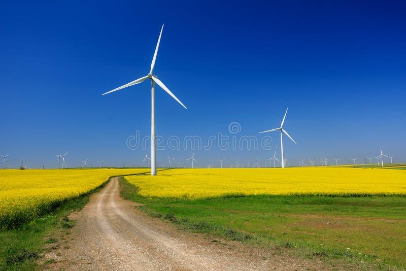 Turbines de vent, zone jaune Champs avec des moulins ? vent Gisement de graine de colza en fleur ?nergie renouvelable images libres de droits