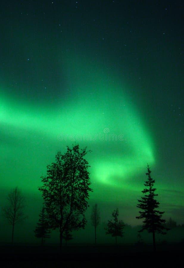 Turbinio dell'aurora sopra gli alberi fotografia stock libera da diritti