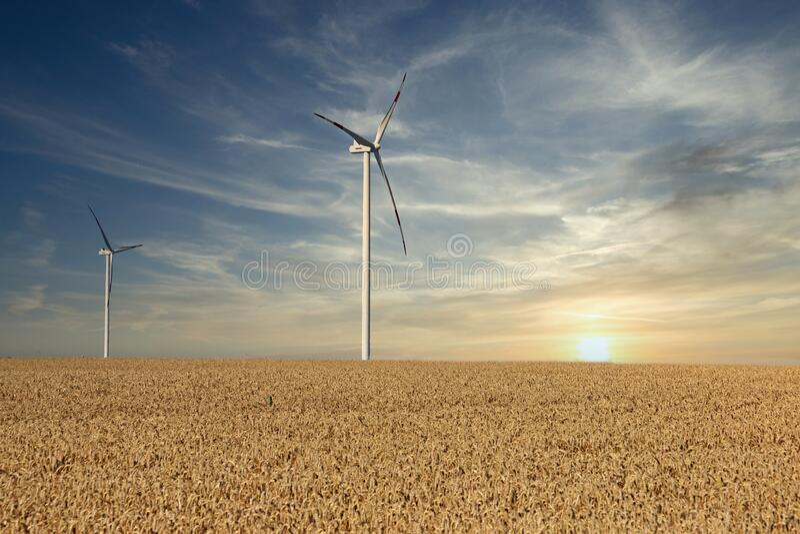 Turbiny wiatrowe na polu pszenicy zachód słońca obrazy stock