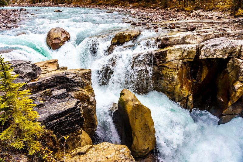 The turbulent water of the Sunwapta River as it tumbles down Sunwapta Falls. In Jasper National Park in the Canadian Rocky Mountains royalty free stock photo
