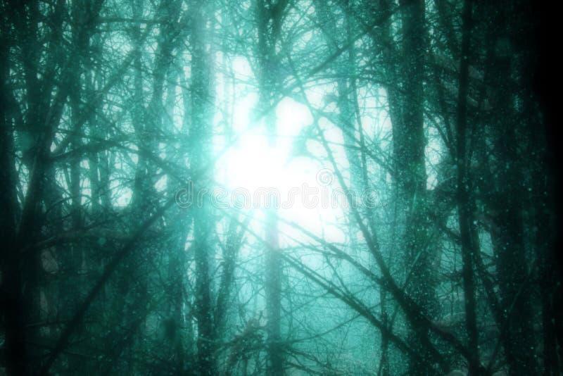 Turchese freddo Forest Bright Surreal Sun fotografia stock