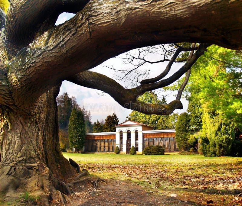 Turcianska Stiavnicka - árvore e arboreto maciços fotografia de stock royalty free