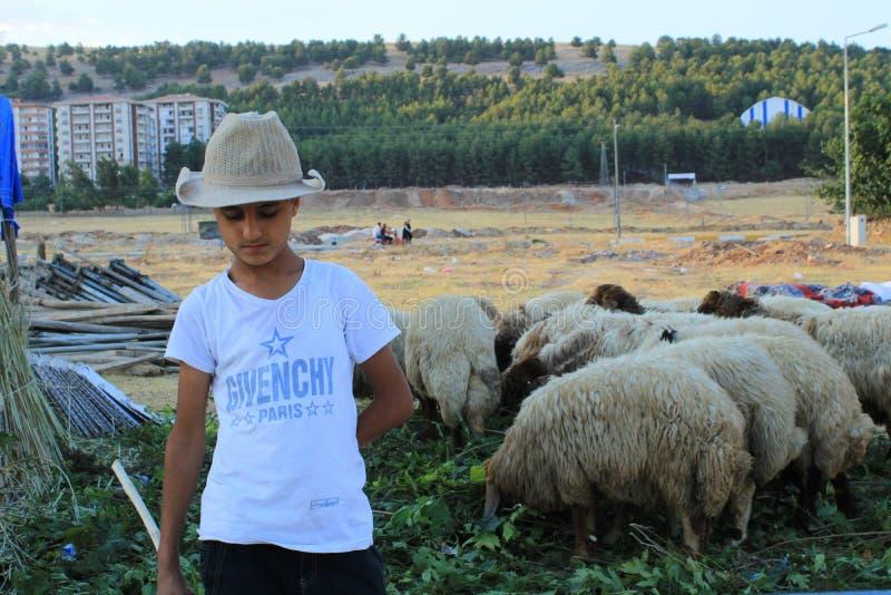 Turco, Adiyaman, il 24 luglio - 2019: Pecore aspettanti del giovane pastore fotografia stock