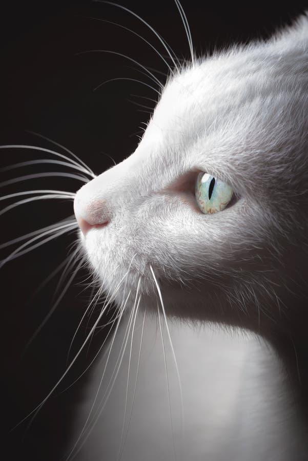 Turecczyzna Van Kot zdjęcie stock