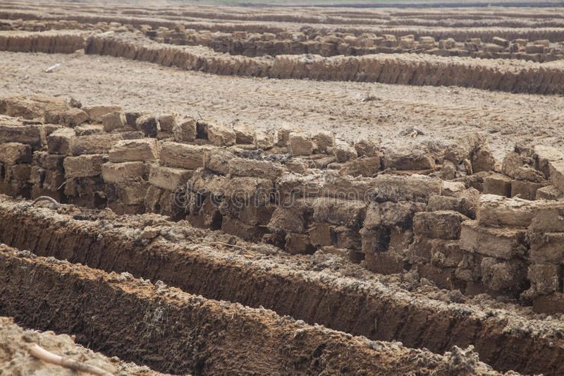 Peat field stock images