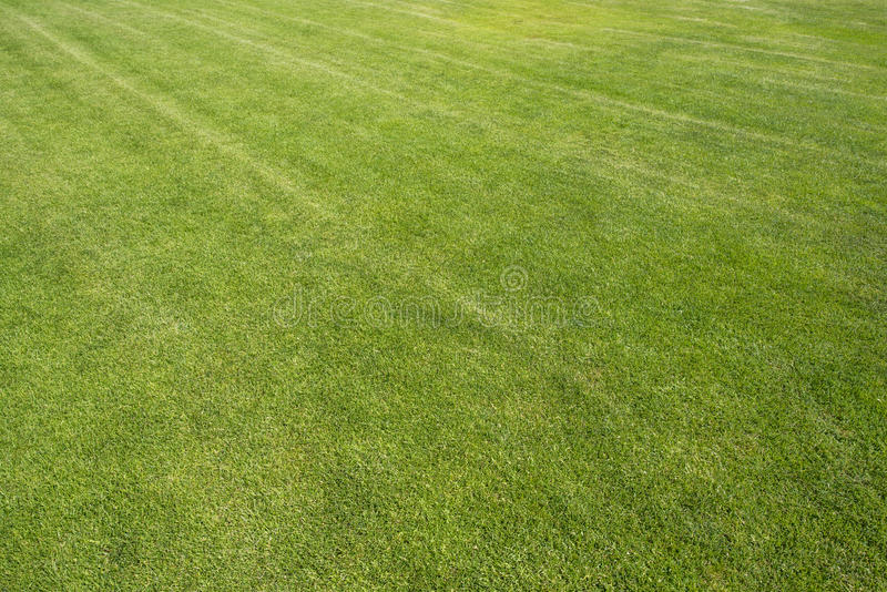 The turf on the football field. Camera Full Frame Lens 14-24 2.8 F11 1/100s ISO 100 royalty free stock photography