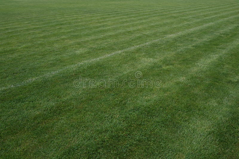 Download Turf stock image. Image of environment, healthy, color - 42415781