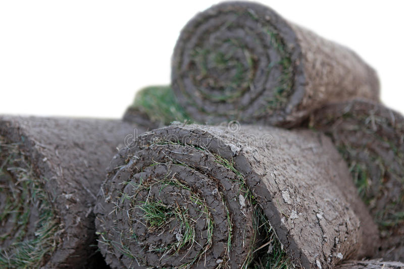 Turf grass rolls. Grass Lawn - Turfs ready to be rolled. Sod Rolls on white background stock image