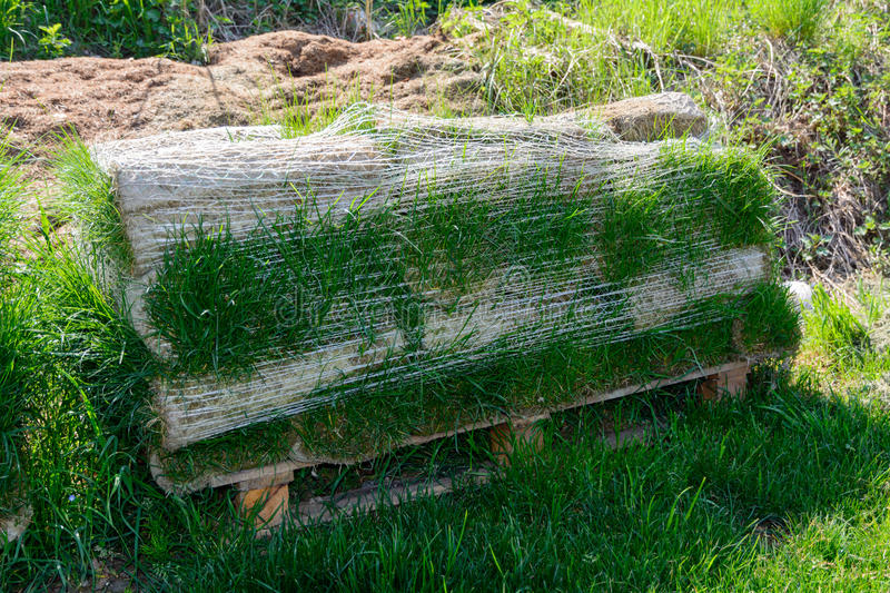 Download Turf For Rolls Stock Photo - Image: 40259240