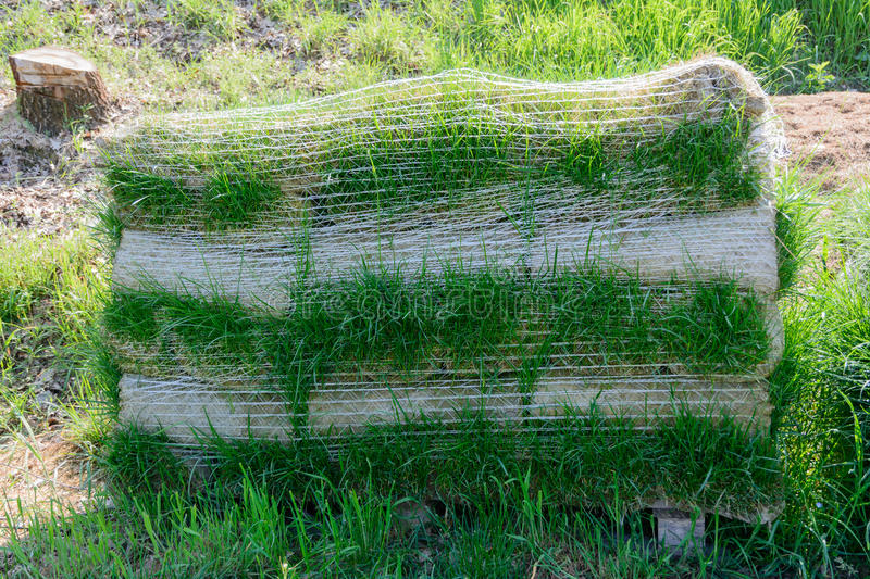 Download Turf for rolls stock photo. Image of grass, gardening - 40259356
