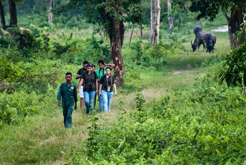 Turismo da floresta foto de stock royalty free