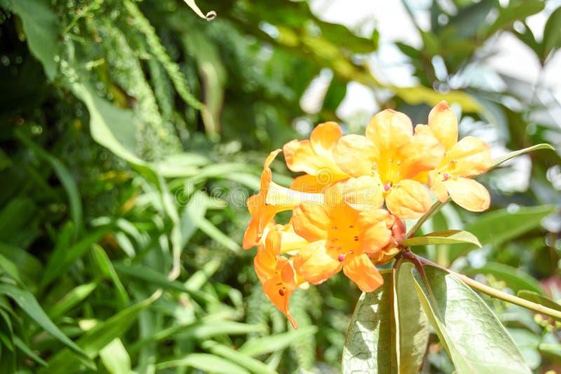 Turismo de la bóveda de la flor de Singapur fotografía de archivo
