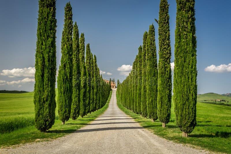 Turismo rural en Toscana con la trayectoria de los cipreses foto de archivo libre de regalías