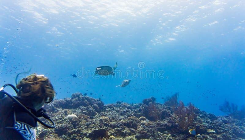 Turist- dykning på korallreven och den hållande ögonen på sköldpaddan för grönt hav royaltyfria bilder