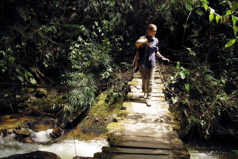 Turist för ung kvinna på en inställd bro över en bergflod i den Cordiliera centralen arkivbild