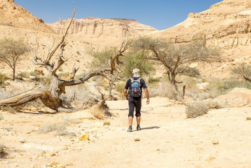 Turist- gå sikt för landskap för berg för ökenslingakanjon arkivfoton