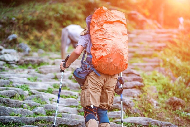 Turist med ryggsäcken på det Annapurna spåret, Nepal royaltyfria bilder