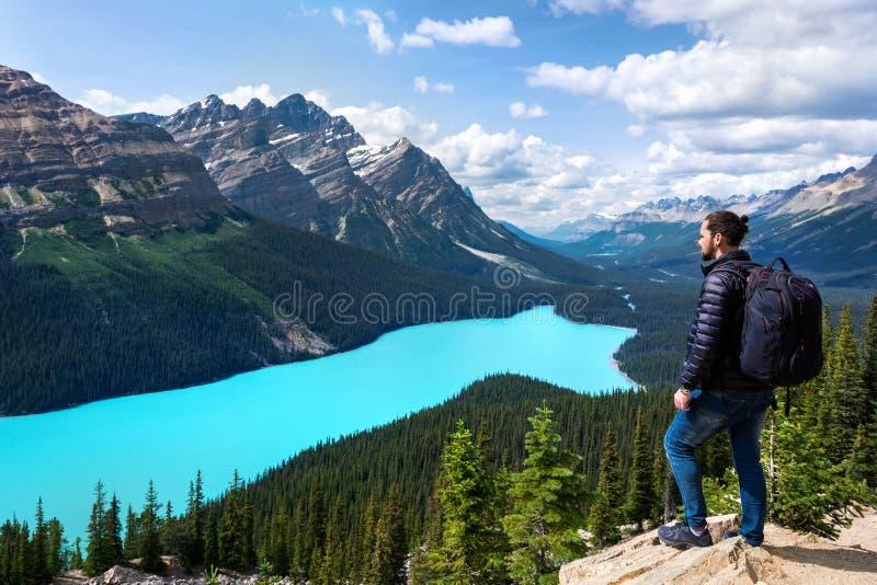 Turist på Peyto sjön i den Banff nationalparken, Alberta, Kanada arkivbild